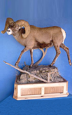 Lifesize-Mount-with-Habitat-and-Base
