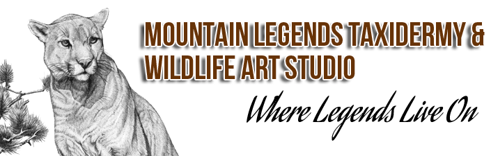 Mountain Legends Taxidermy & Wildlife Studio